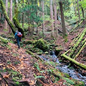 著迷於豐富大自然的山中健行體驗 七葉樹生長地健行