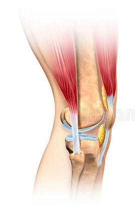 Difetti cartilagine
