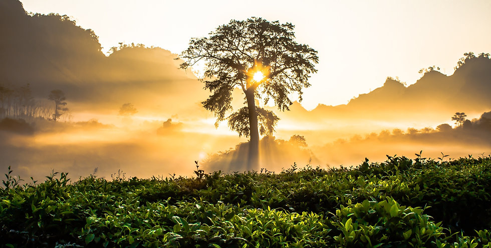 Canva - Tree of Life Overseeing Sun Rays_edited.jpg
