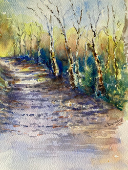 Silver birch walk