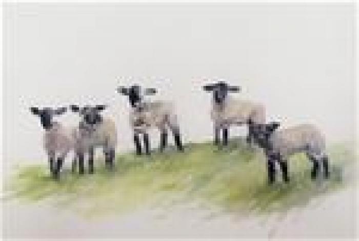 Primary school lambs