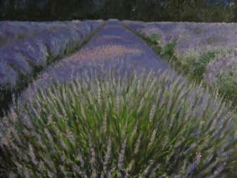 Lavender Evening