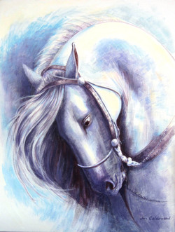 Magnificent Andalusian