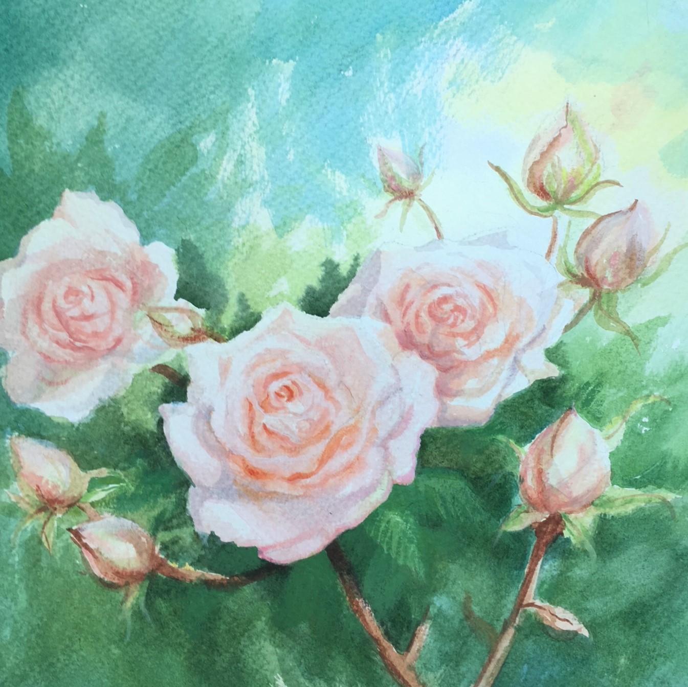Alnwick Roses