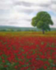 Poppies Northumberland.jpg