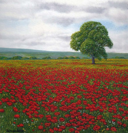 SOLD Poppies Northumberland