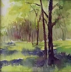 Spring woodland 1