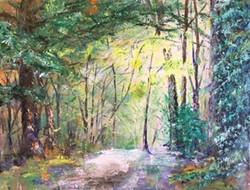 Wallington West Woods