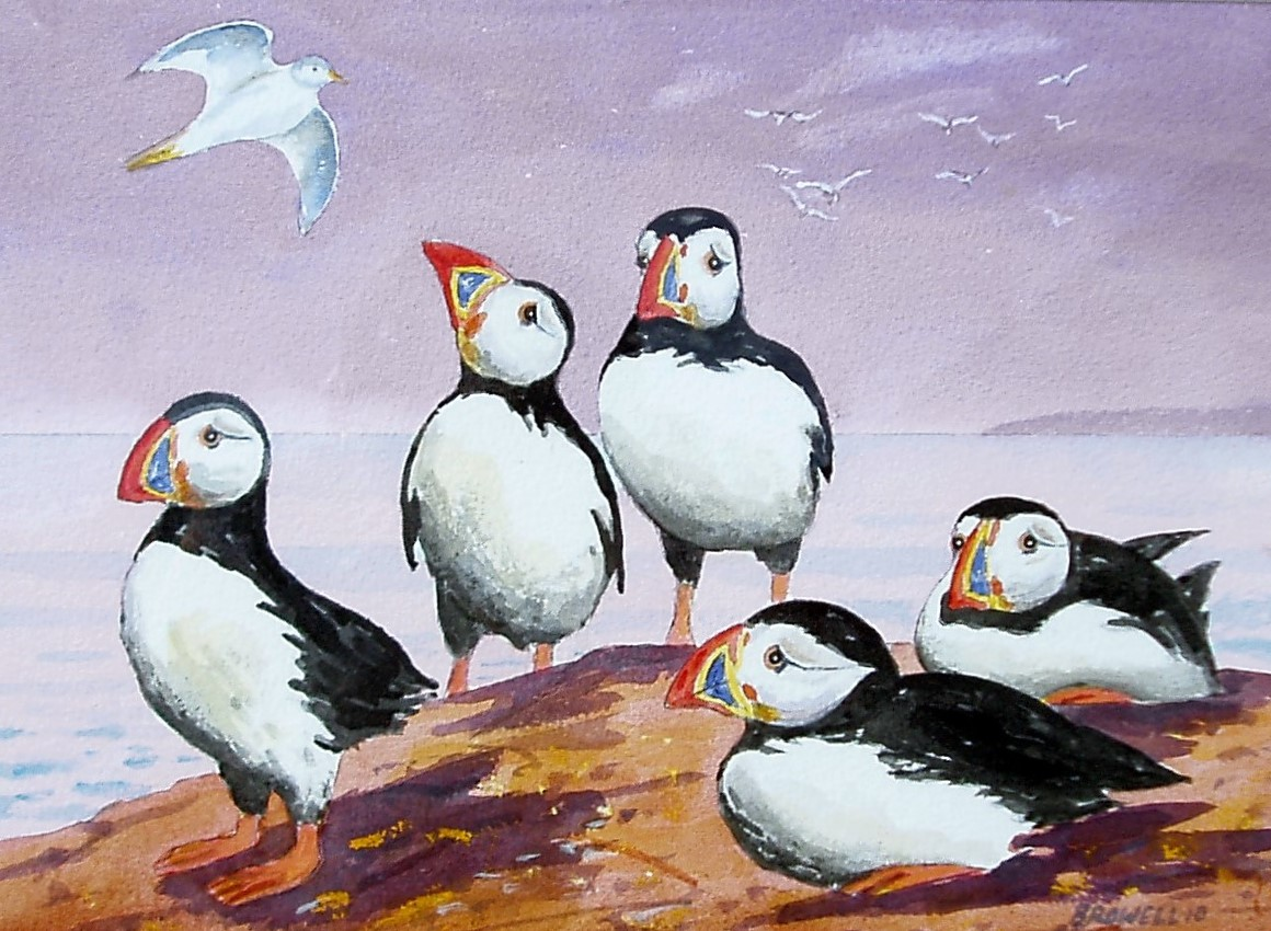 Puffins pink sky    sold