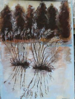 Plants on a frosty pond