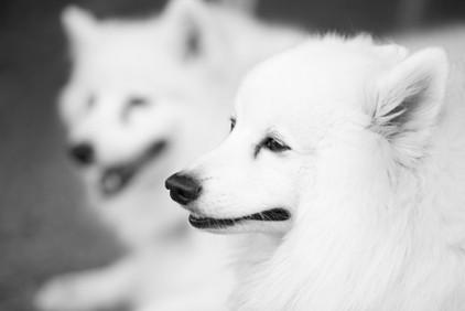 AKR_Photography_Animals_Paw_Imprints_13.