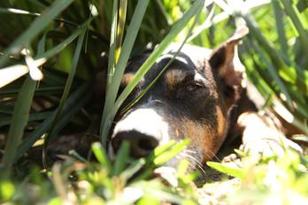 AKR_Photography_Animals_Paw_Imprints_44.