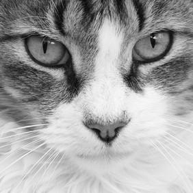 AKR_Photography_Animals_Paw_Imprints_12.