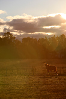 AKR_Photography_Animals_Paw_Imprints_4.J
