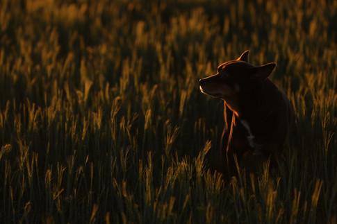 AKR_Photography_Animals_Paw_Imprints_2.j