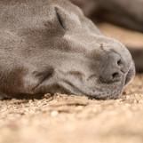 AKR_Photography_Animals_Paw_Imprints_15_