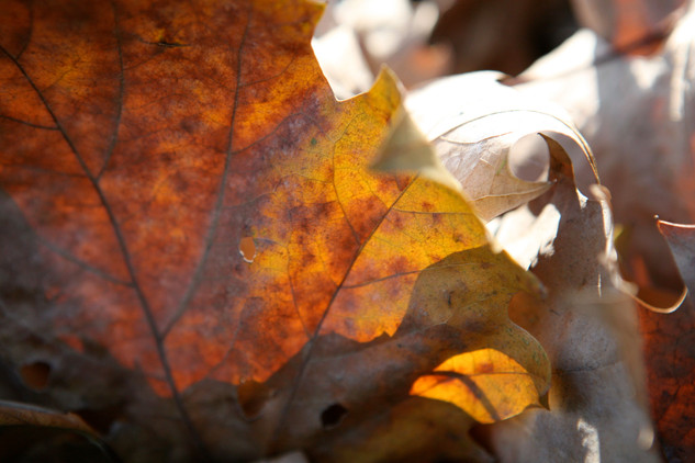 AKR_Photography_Nature_7.jpg