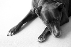 AKR_Photography_Animals_Paw_Imprints_31.