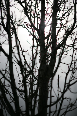 AKR_Photography_Nature_36.JPG
