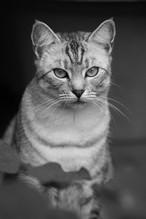 AKR_Photography_Animals_Paw_Imprints_39.
