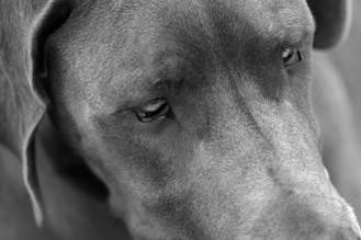 AKR_Photography_Animals_Paw_Imprints_11.