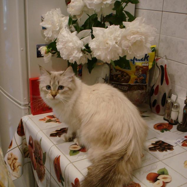 Мамаn D'ATLAS Elisabeth Imperial Ji.jpg