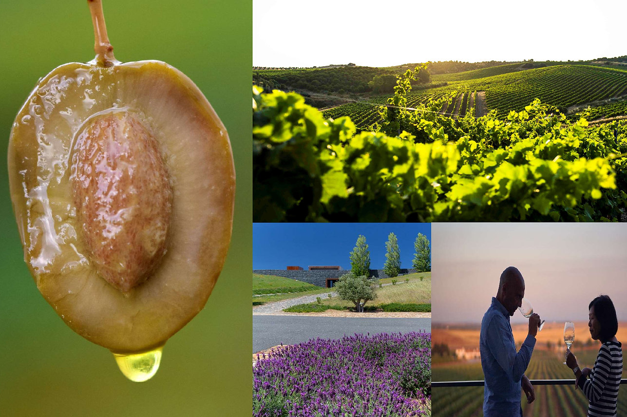 Discovering-Wines-Olive-Oils-_-A-Roman-V
