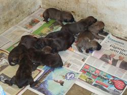 Filhotes 10 dias