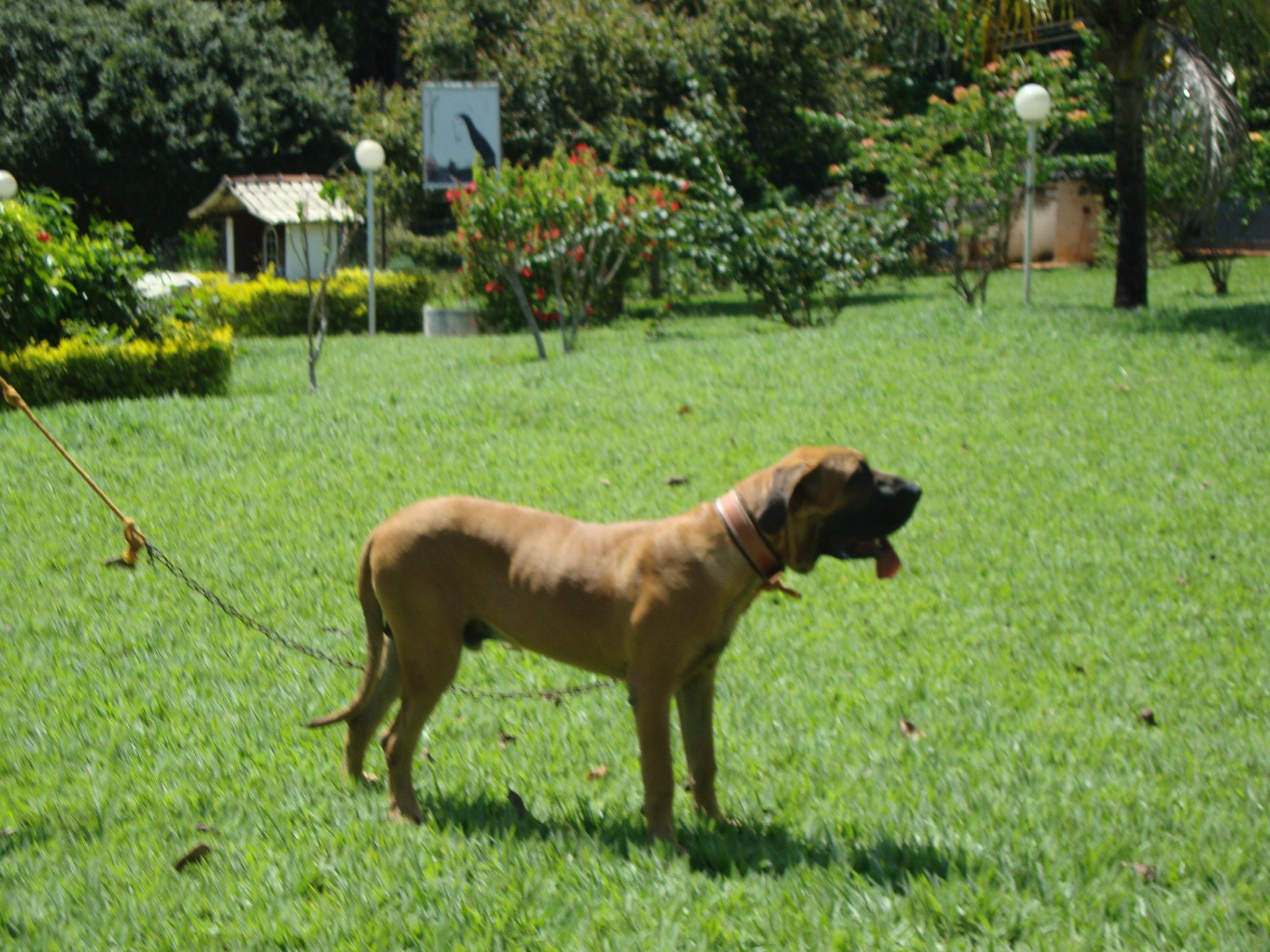 Cachorro 8 meses (CAFIB)