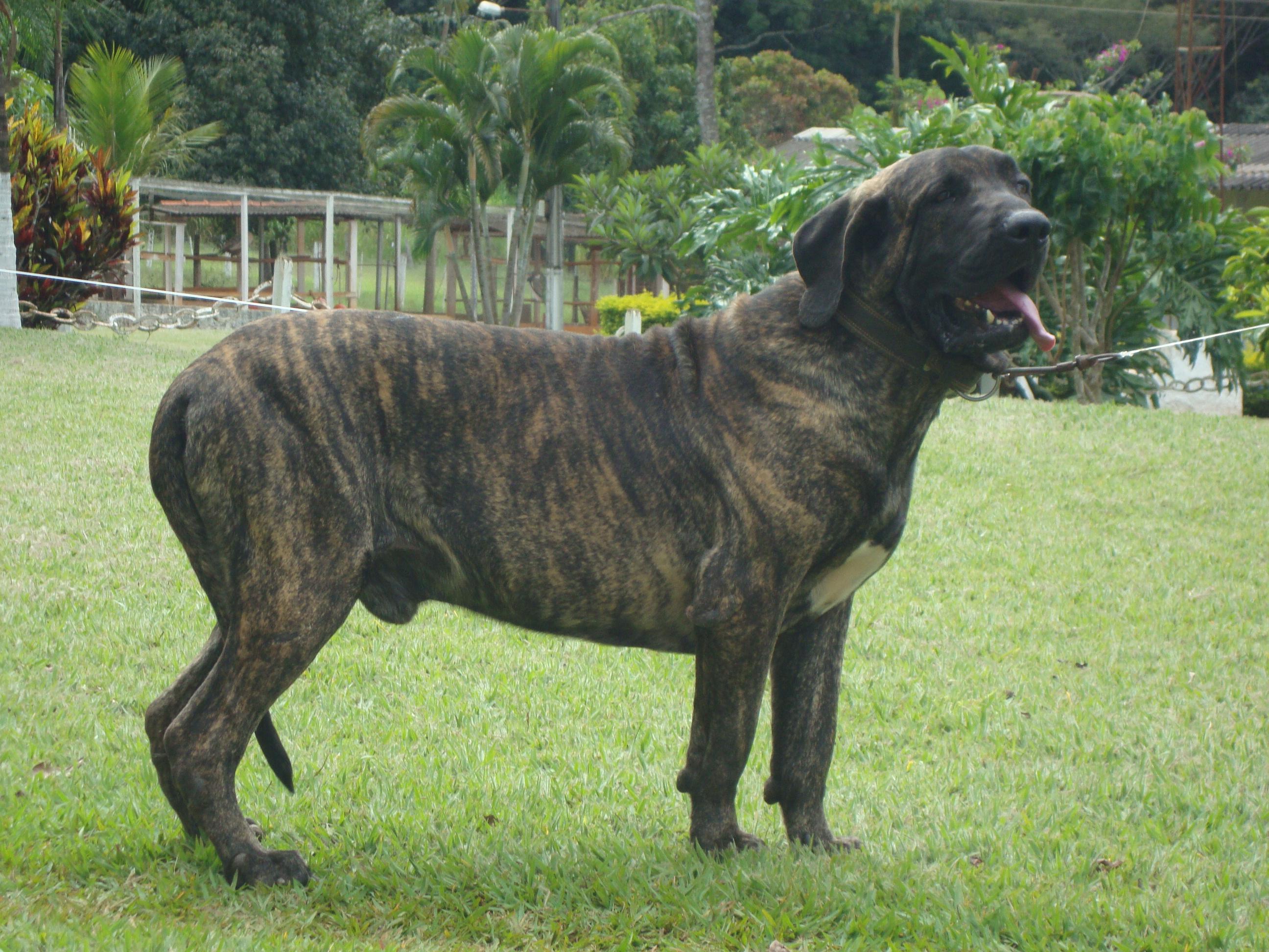 Cachorro Reprodutor 6 anos (2)