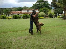 Cachorro Reprodutor 6 anos (3)