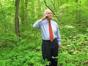 עצים ביער | על קבלת החלטות בתנאי אי-ודאות