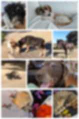 animal collage 1.jpg