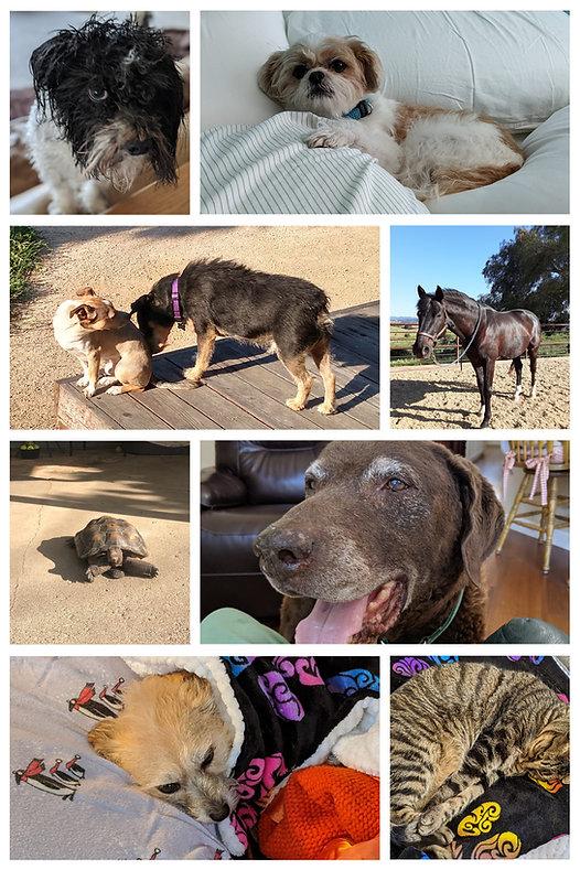 animal collage 1.jpg