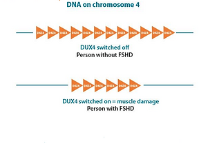DNA_on_chromosome_4.png