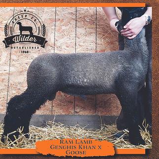 2009 Ram Lamb.jpg