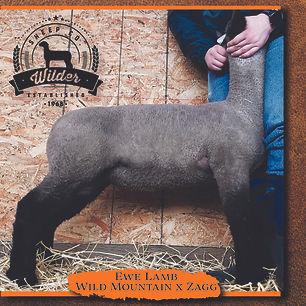 2059 Ewe Lamb.jpg