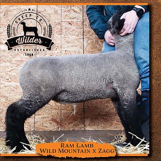 2058 Ram Lamb.jpg