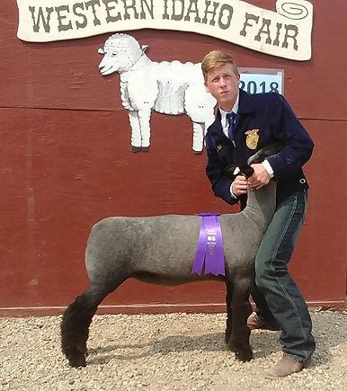 Champion Natural Ewe.jpg