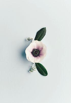 white-petaled%20flower_edited.jpg