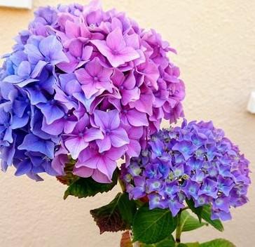 Colour from the garden