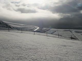 Winterzeit - die dunklen Tage - Welches Kraut ist gegen Winterblues gewachsen?