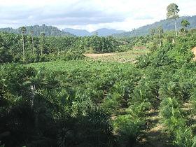 west sumatra (151).jpg
