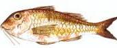 Sugerencias para una buena receta a base de pescado