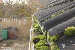 guttering-with-moss1