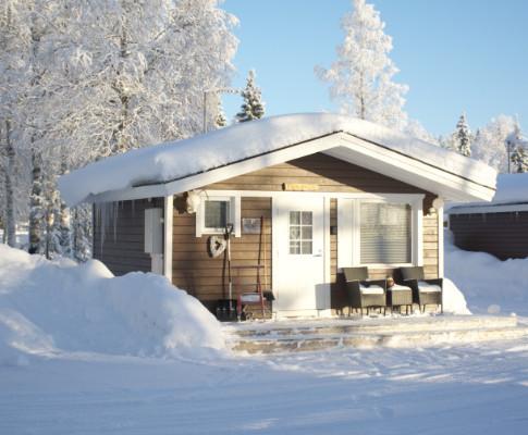 Puolukka in winter .. en hiver