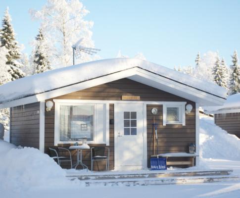 Mustikka in winter .. en hiver