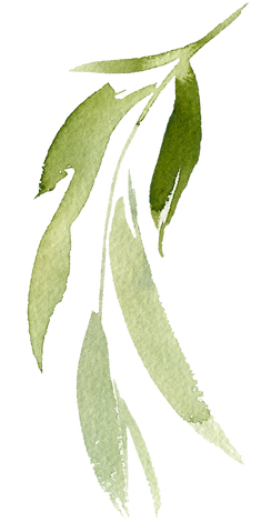 branch-2 (3).png