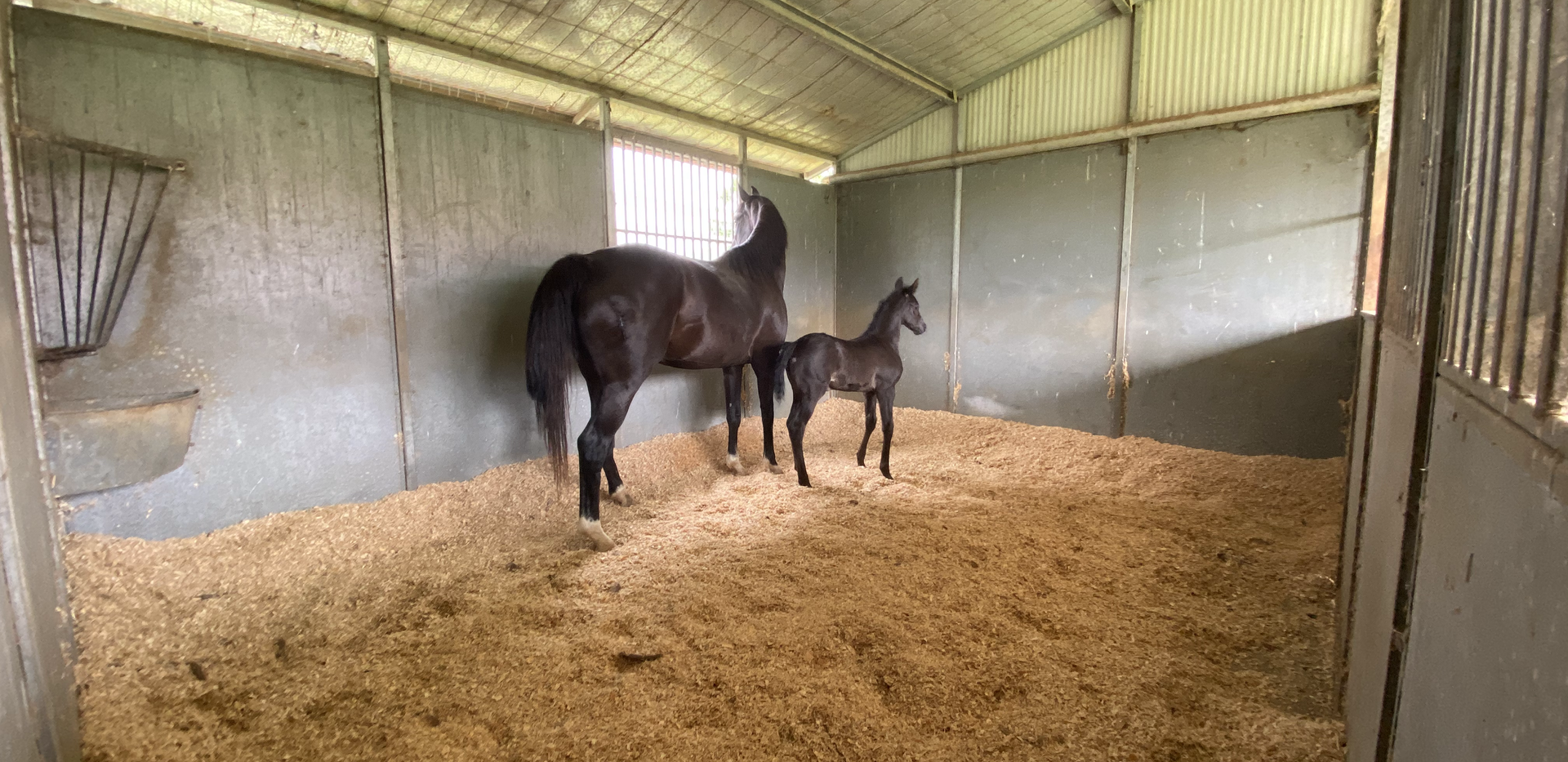 One of our mare and foal stables