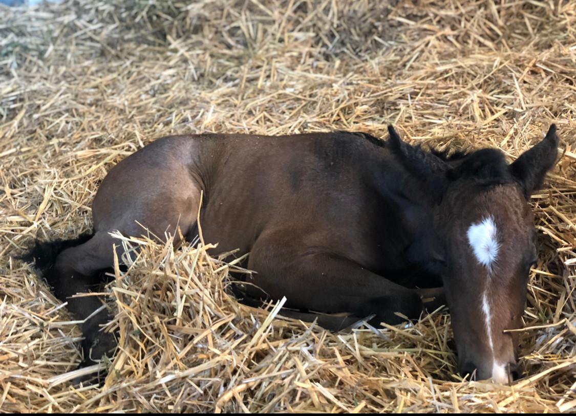 Sleeping filly foal Catalina Angel